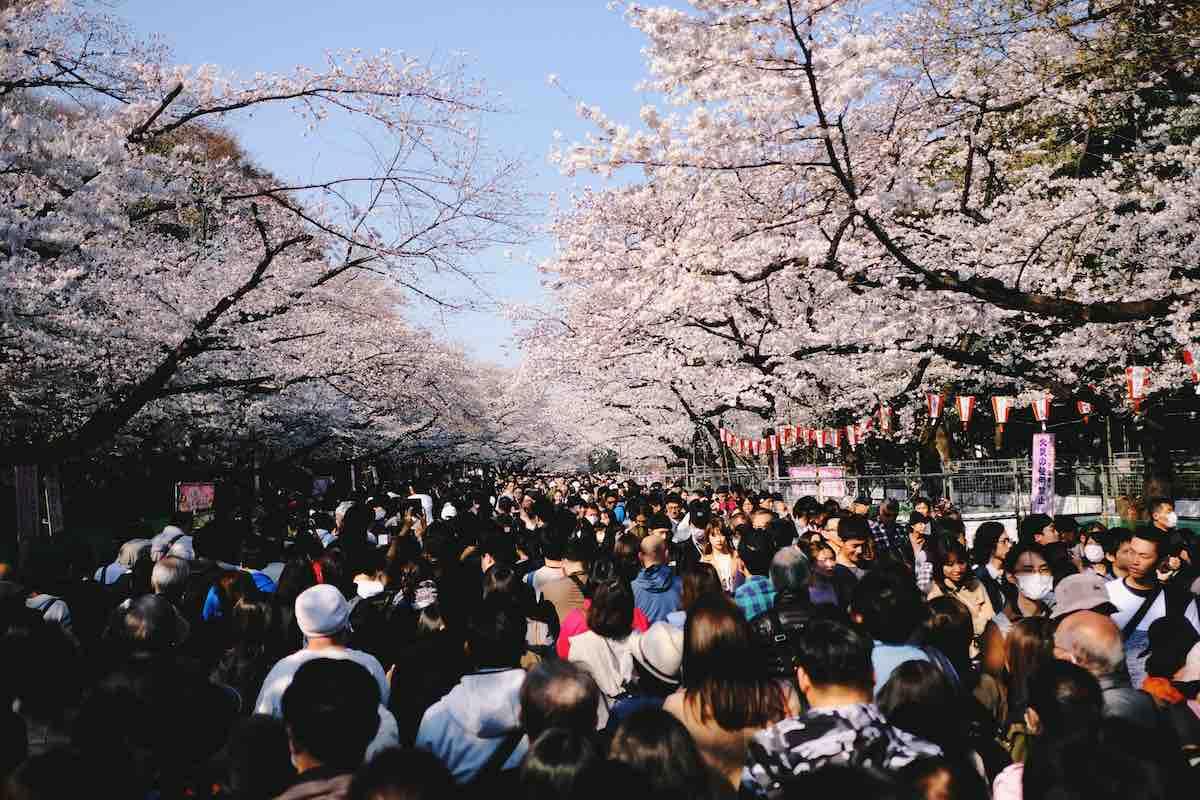 ueno park tokyo cherry bloesem bomen